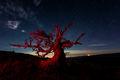Mauna Kea Red Wood print