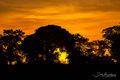 Orange Sky Serengeti print