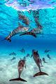 Kua Dolphin Vertical print