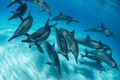 Kua Dolphin Close up print
