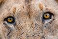 Africa, Serengeti, Tanzania, African Wildlife