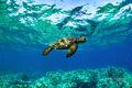 Aquatech Turtle print