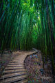 Bamboo Vertical print