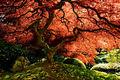 Tree and Life print