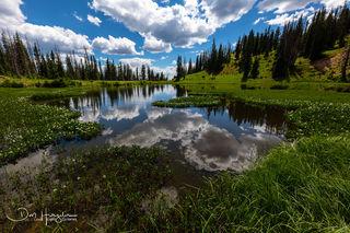 Snowy Range Meadow