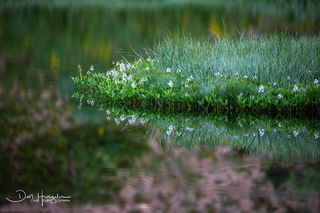 Meadow Reflection