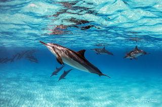 Kua Dolphin Asleep at the Wheel