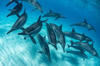 Kua Dolphin Close up