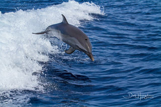 Dolphin Launch