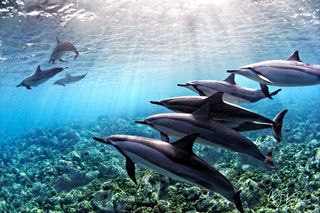 Dolphins in the Light