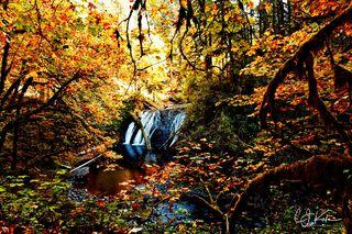 Falls Framed in Fall