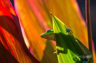 Garden gecko.