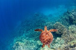 K-Bay Turtle
