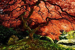 Tree And Life
