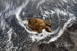Turtle Swirls
