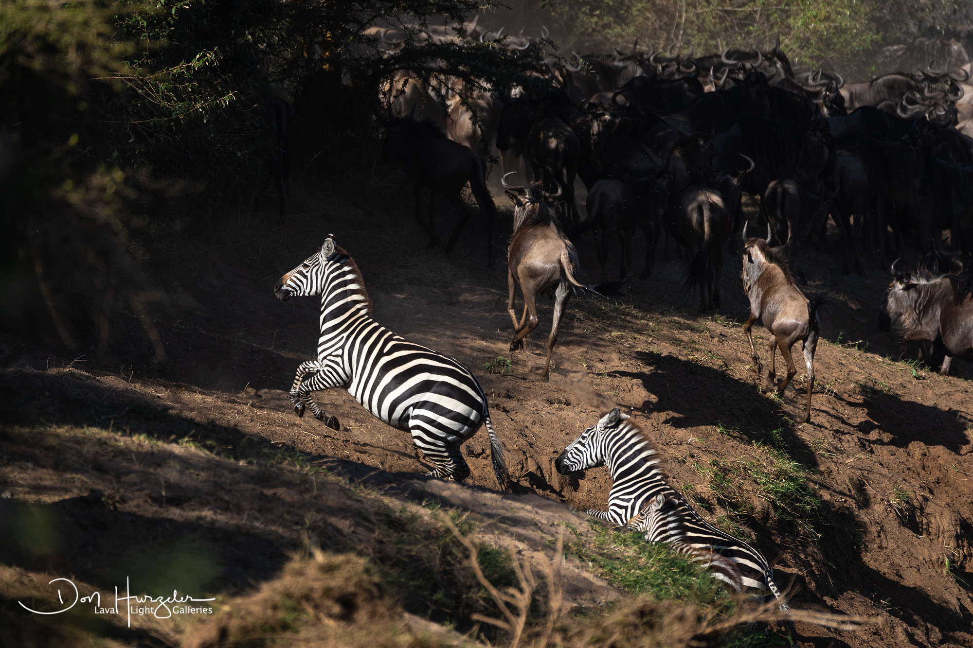 Africa, Serengeti, Tanzania, African Wildlife, photo