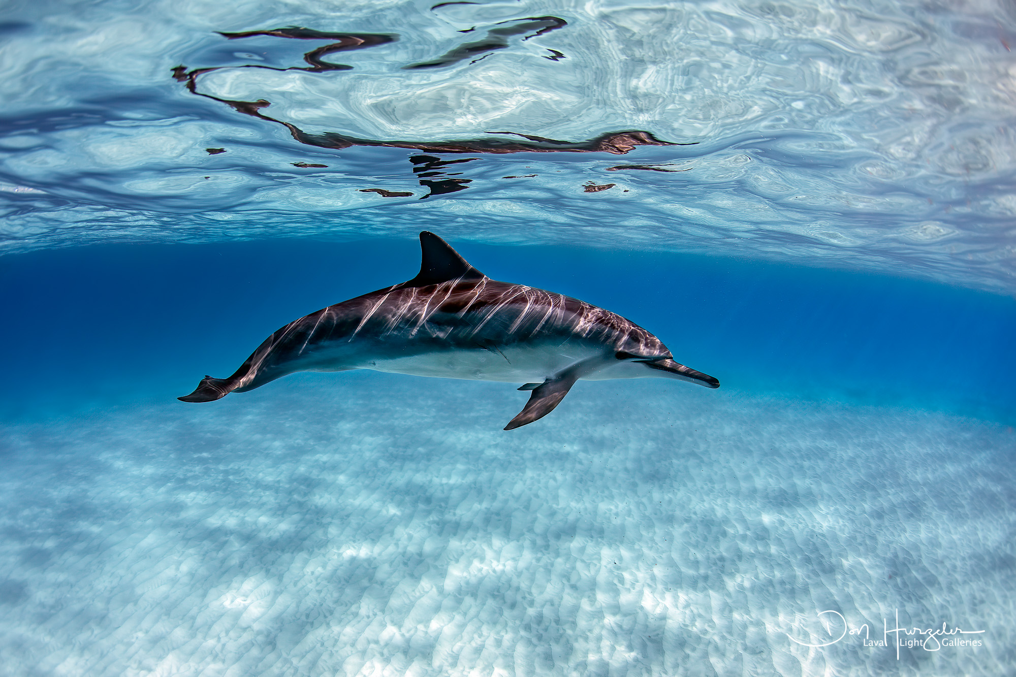 Kua Dolphin Epic