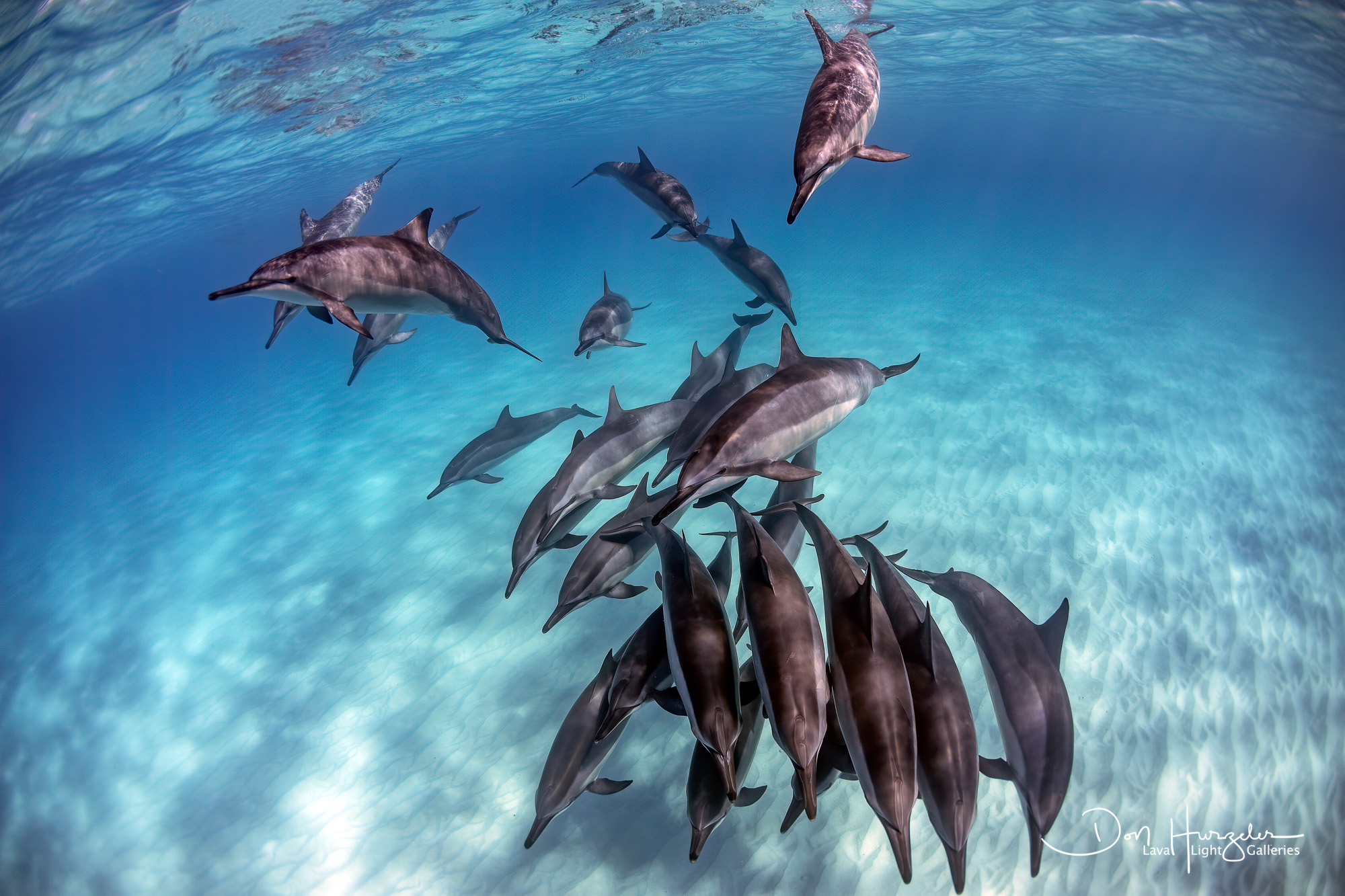 Kua Dolphin Clear