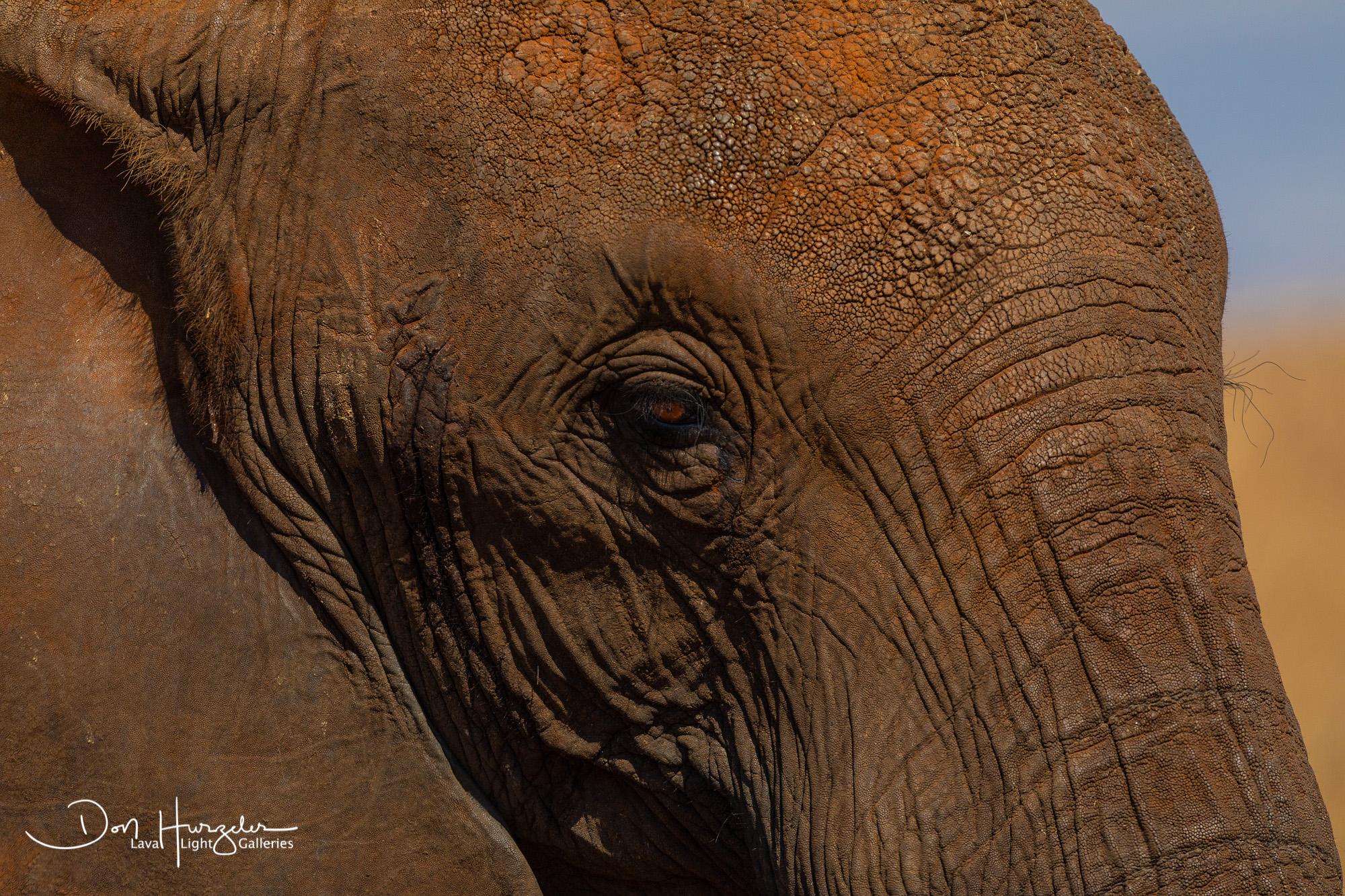 Africa, Serengeti, Tanzania, African Wildlife, photo