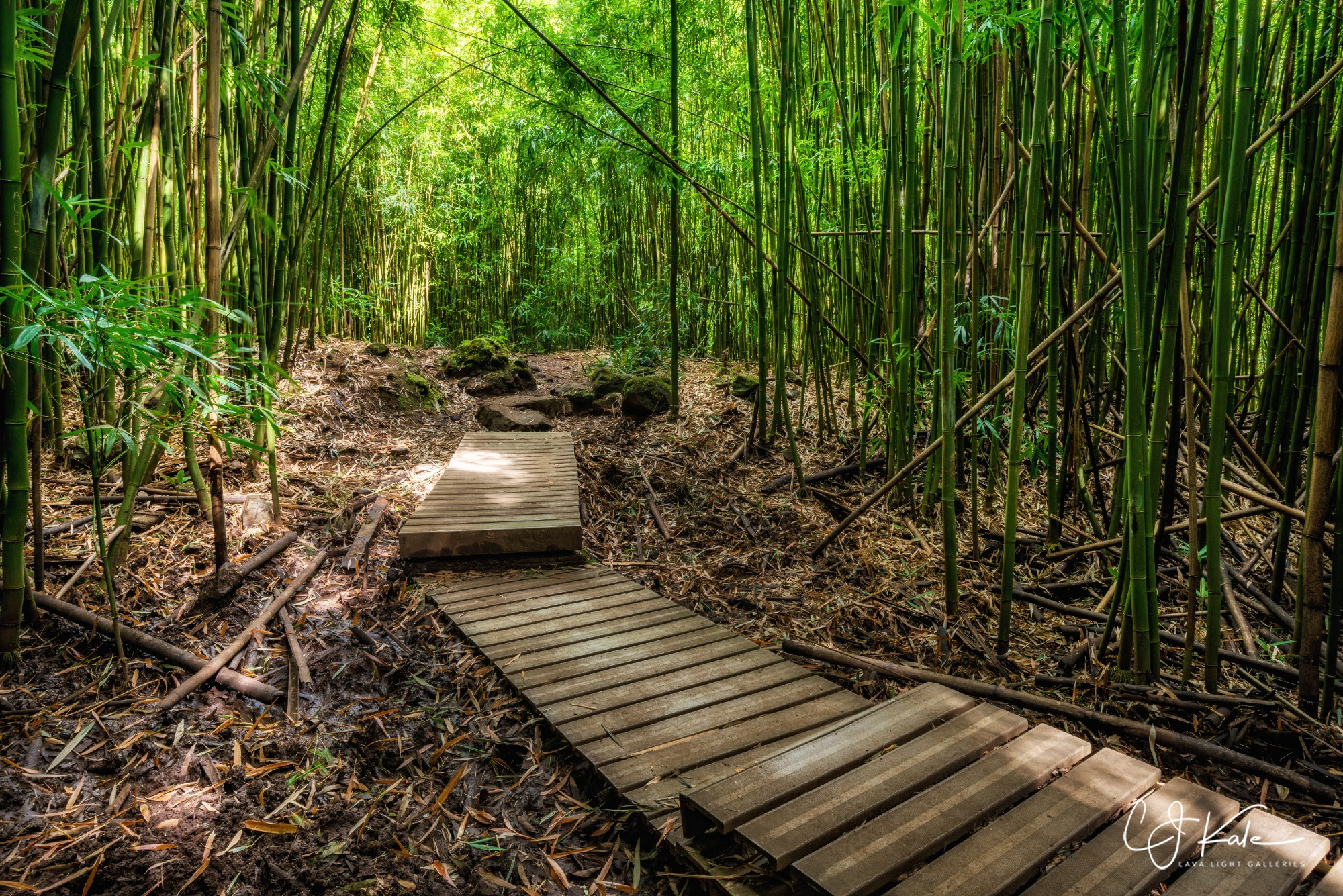 In the bamboo forest.