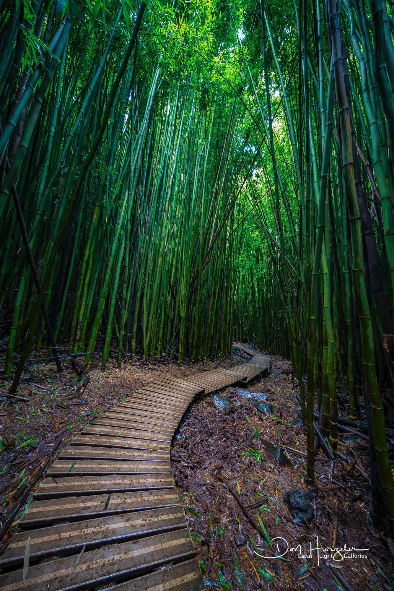 Bamboo path...Maui.