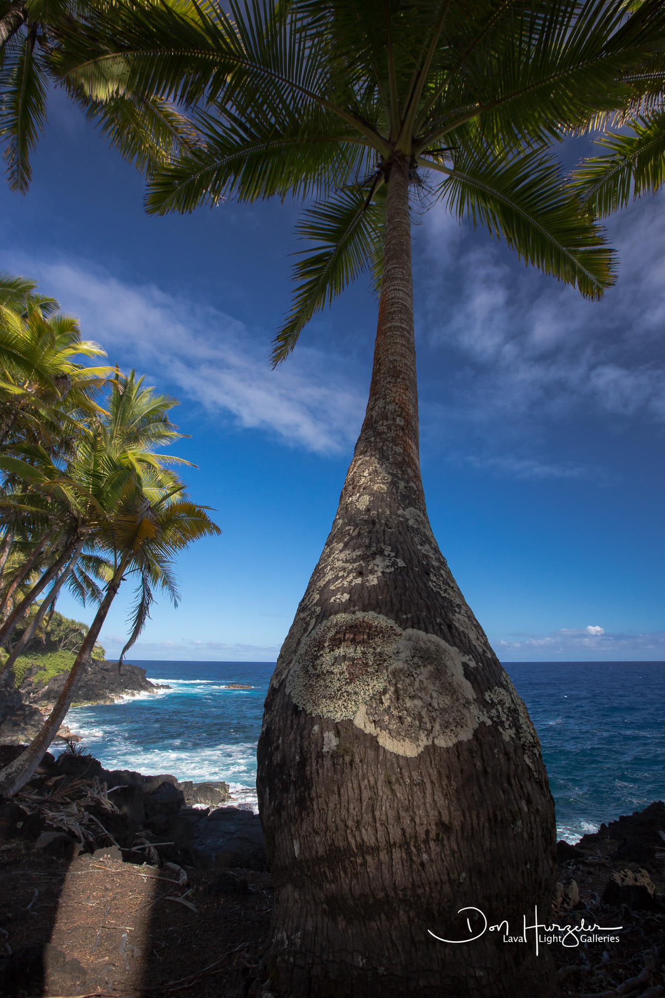 Fisheye shot of a palm.