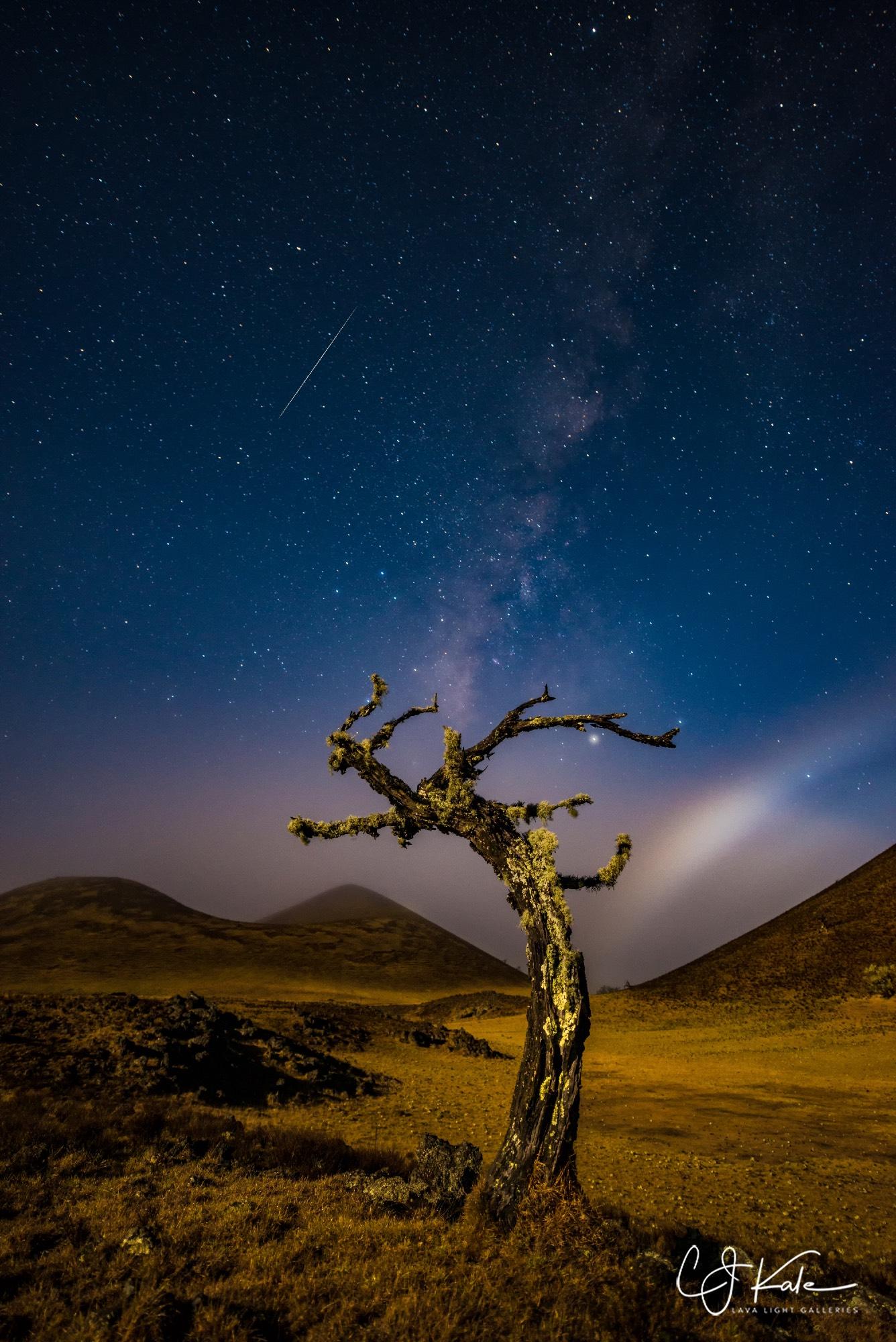 Meteor, tree, stars, moon bow...got it all.