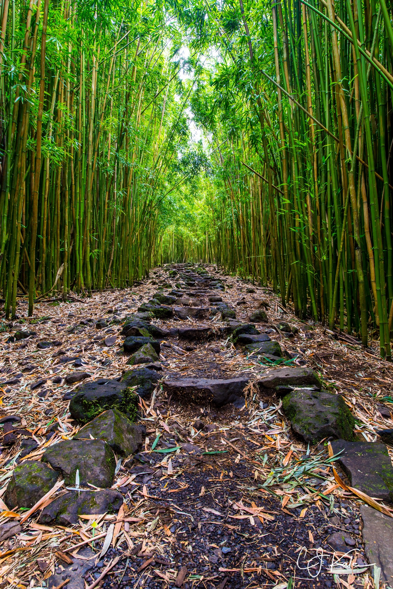CJ captures a section of the Bamboo Path on Maui.